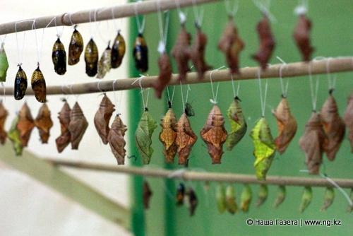 Чем кормить бабочек в домашних условиях зимой