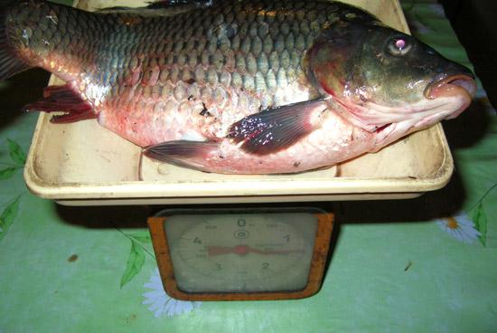 кустанай прогноз клева рыбы