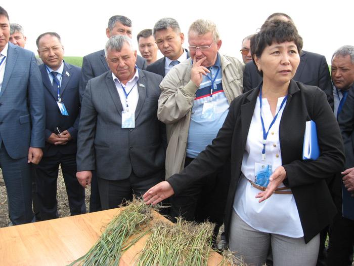 Айгуль Олейник показывает, что пшеница поражена сразу несколькими видами заболеваний