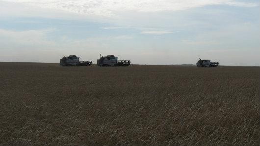 Аграрии Северного Казахстана намолотили 4,3 млн тонн зерна